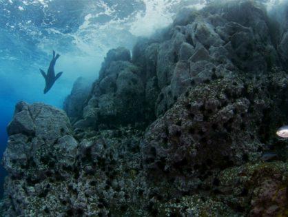 Chile tendrá un parque marino más grande que Ecuador