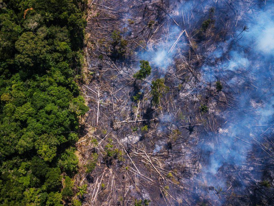 El Amazonas sigue en llamas: lo que está pasando y como puedes ayudar