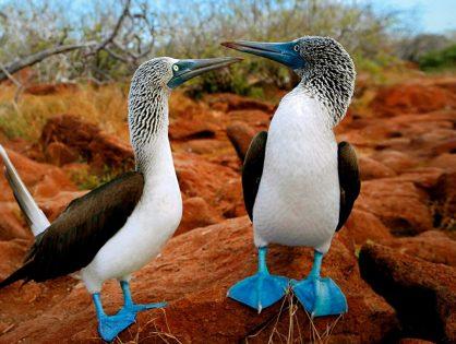 La Islas Encantadas se reabrieron al turismo